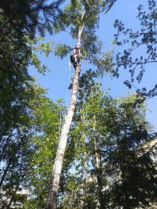 Puunkaatoa kiipeämällä puuhun
