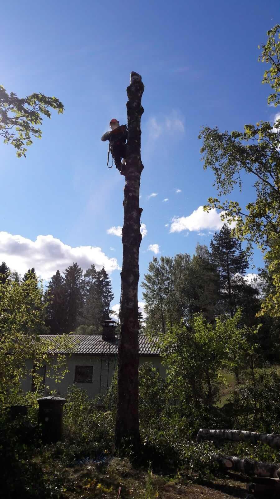 Puun kaatoa kiipeämällä
